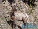 Expedícia USA Yellowstone n.p.